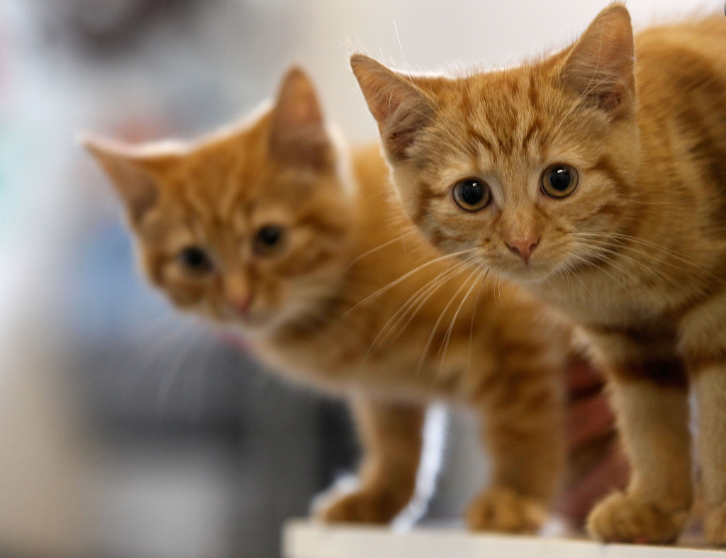 Would you consider declawing?