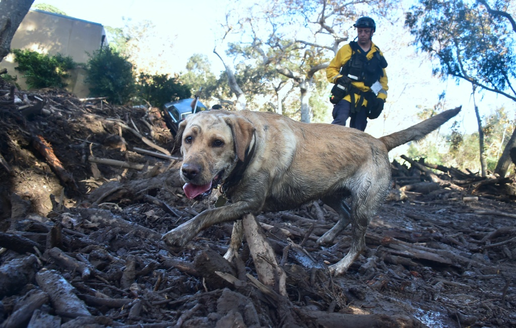 A member of a search and rescue team and his search dog sift through debris looking for victims on a property in Montecito, California on January 12, 2018.