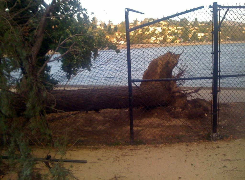A downed tree smashed through a fence at Silver Lake reservoir, Dec. 1, 2011.