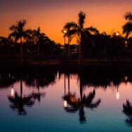 palm trees reflection CA meets FLA