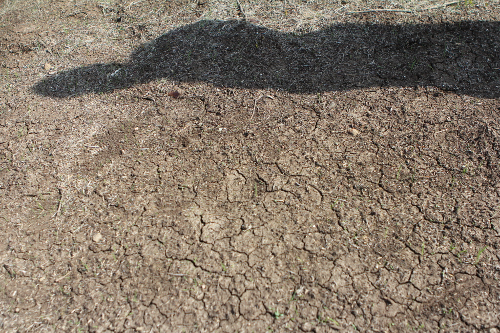 File photo: Heavy rainfall has left cracks in the soil, which had been baking for months during the dry winter. This photo was taken on March 6, 2014.