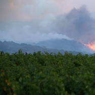 NAPA, CA - OCTOBER 10:  A fire breaks out in the hills above a vineyard at the Atlas Fire on October 10, 2017 in Napa, California.  Fifteen people have died in wildfires that have burned tens of thousands of acres and destroyed over 2,000 homes and businesses in several Northen California counties.  (Photo by Ezra Shaw/Getty Images)