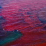 Red Tide off the shores of San Diego County, 2015