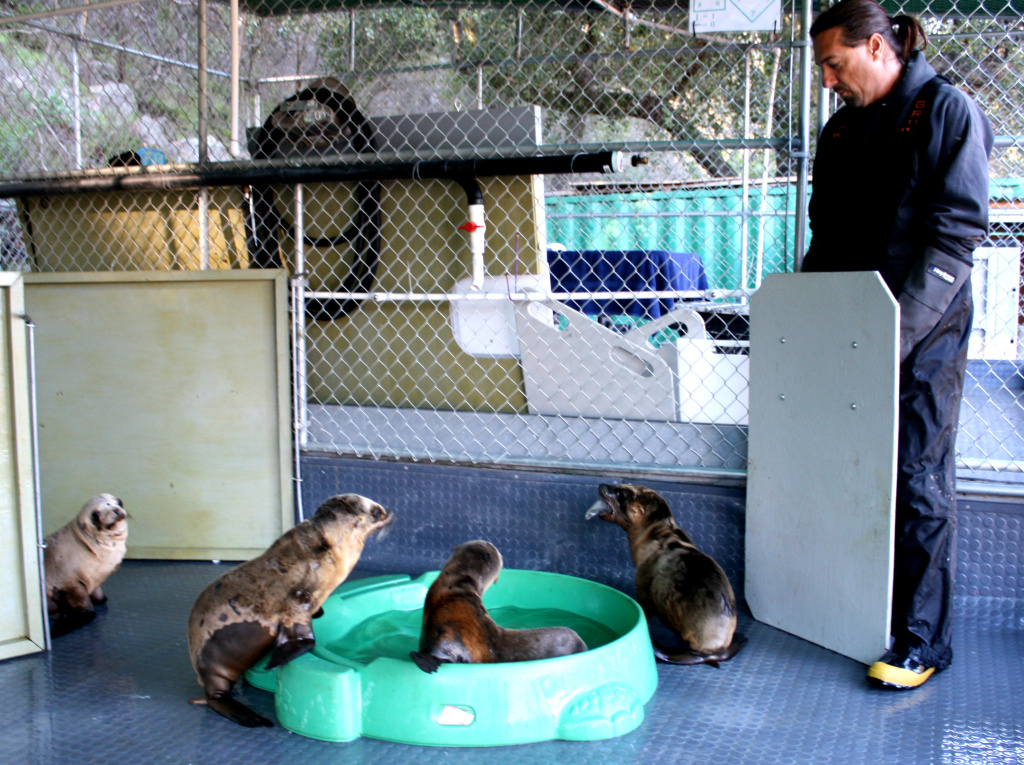 California Wildlife Center's Mike Remski uses