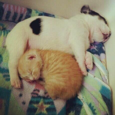 Image of adoptable kitten and puppy pair, Mango and Milkshake.