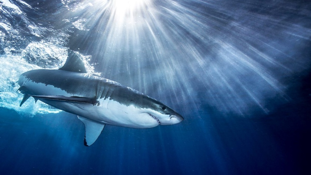 Still from the BBC series, Shark. It's one of the titles we talk about on The Binge.