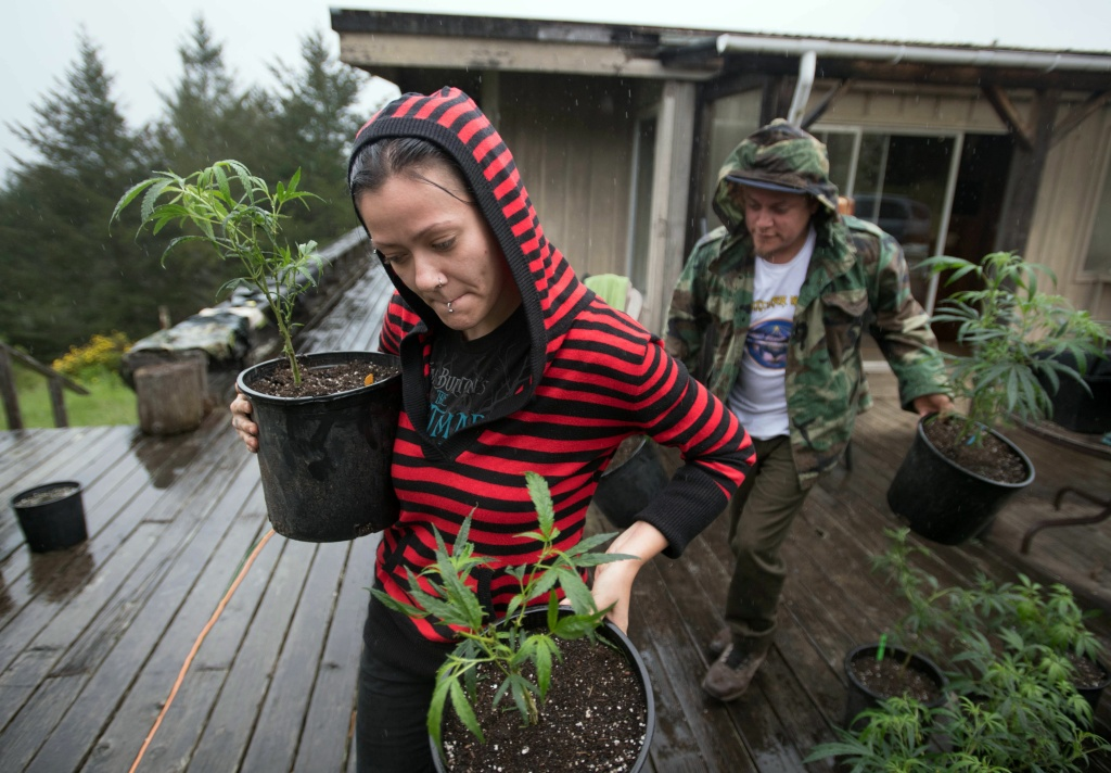 Percilla and Chris, who are part of a live/work exchange program, carry marijuana plants into a greenhouse in Mendocino County, California on April 19, 2017.