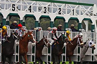 Start of a horse race at Santa Anita Park