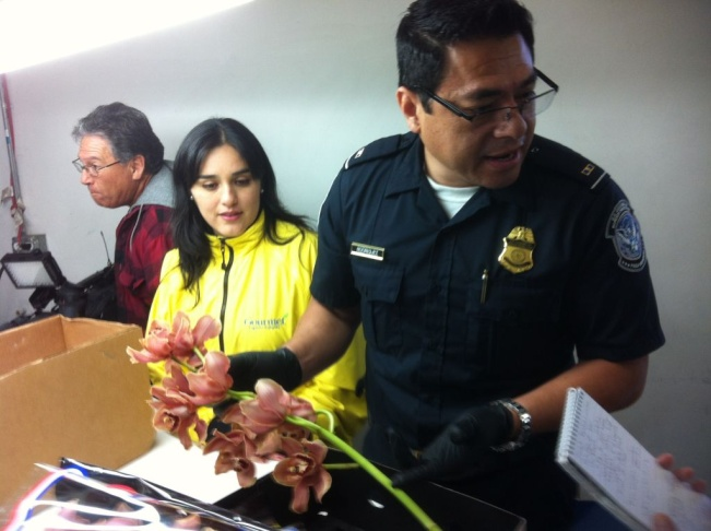 Agriculture Specialist Robin Marten uses a magnifying instrument to examine roses imported from Ecuador.