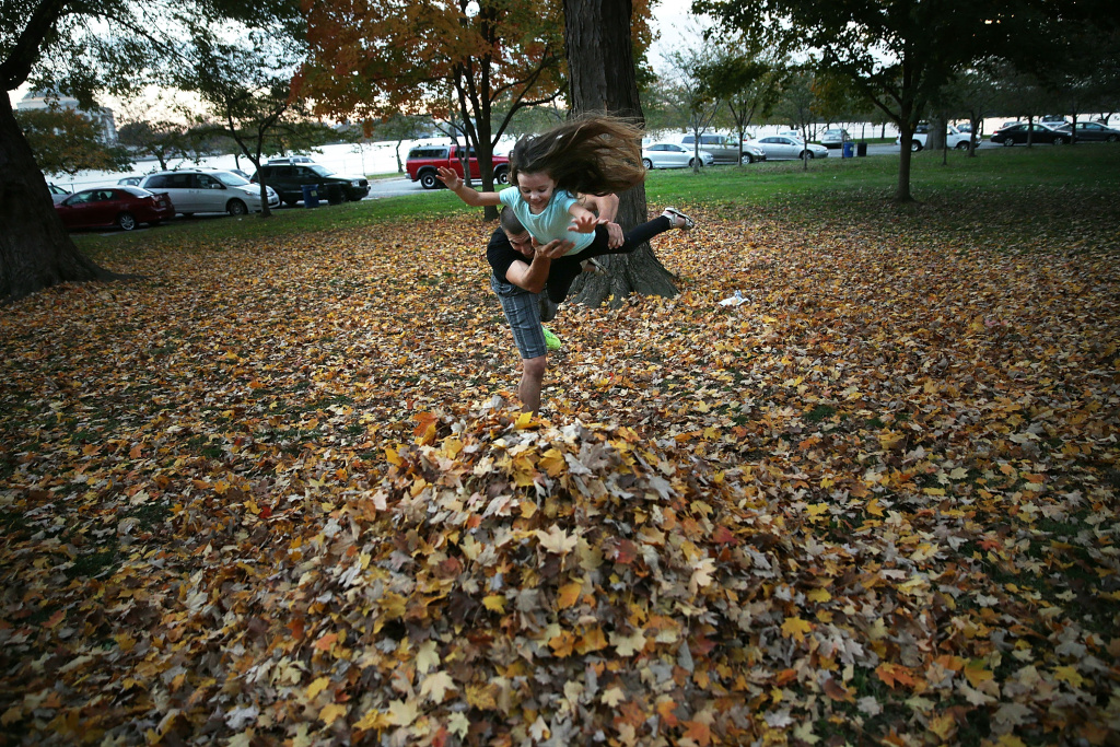 Four-year-old Hailey Bruno plays with her father Joe on a pile of fallen leaves at the Tidal Basin on a warm evening November 6, 2015 in Washington, DC.