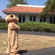A screen grab from a video on cougar sightings at Cuesta College.