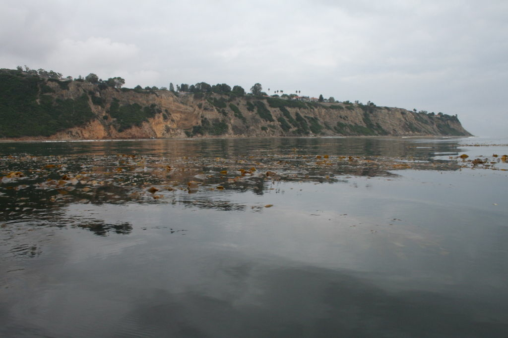 Kelp forests off Palos Verdes Point are rich, and consequently attract diverse marine life.
