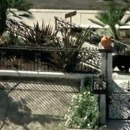 Granada Hills Bear
