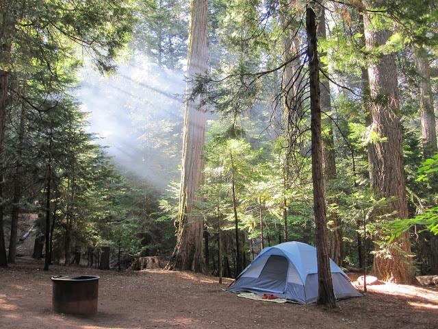 Light shines through a campsite at Calaveras Big Trees State Park.
