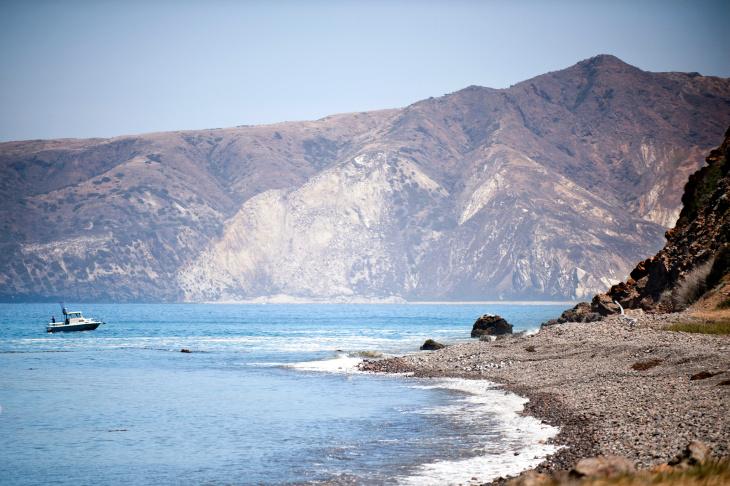 Santa Cruz Island Fox Recovery - 2