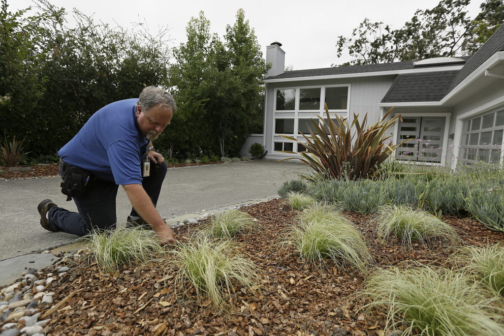 In this photo taken Tuesday, Aug. 23, 2016, city water resources specialist Randy Barron looks over a garden made to use less amount of water outside a Lomita Heights home in Santa Rosa, Calif. California water agencies that spent more than $350 million in the last two years of drought to pay property owners to rip out water-slurping lawns are now trying to answer whether the nation's biggest lawn removal experiment was all worth the cost.