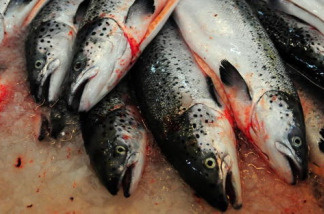 Salmon are ready to be washed and manufactured in Puerto Montt, southern Chile.