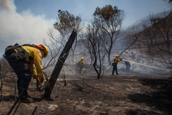 Cattle walk in the burned-down Haven Hills Ranch on an unnamed road off Highway 243 as the Silver Fire continues to burn in the San Jacinto Mountains near Banning, Calif. on Friday, Aug. 9.