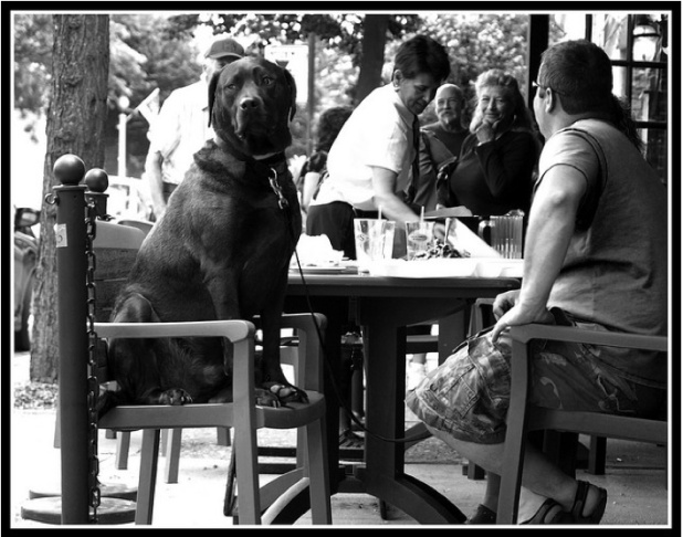 dog chair patio restaurant