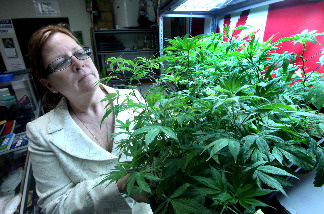 Lanette Davies, co-owner of CANNA CARE, a medical marijuana shop, looks at some young marijuana plants at their facility in Sacramento, Calif., Tuesday, Sept. 21, 2010. Earlier in the day Davies and medical marijuana rights advocates held a news conference to discuss their opposition to Proposition 19, the November ballot initiative that would legalize the drug for recreational use claiming the measure contains inadequate protections for medical marijuana patients.