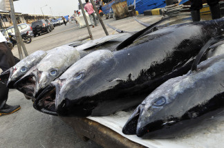 Overfishing has become a very large environmental problem