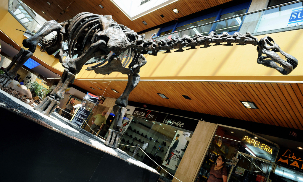 A replica of a Titanosaurus Australis Dinosaur skeleton is displayed in the