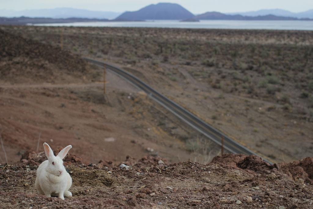 bunny freeway road