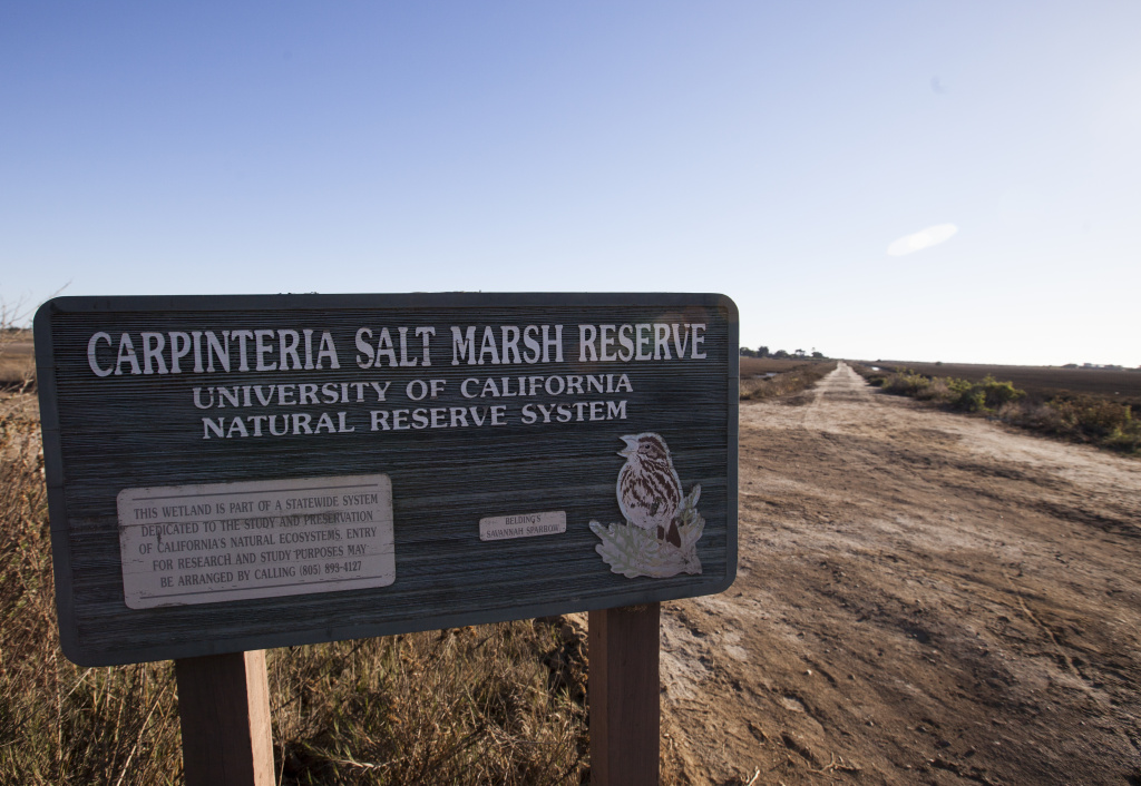 The Carpinteria Salt Marsh Reserve.