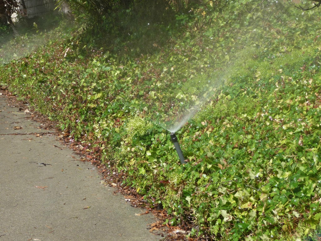 Water restrictions being proposed at the the State Water Resources Control Board would fine trespassers $500 a day for overwatering front lawns or washing a car without a nozzle on the hose.