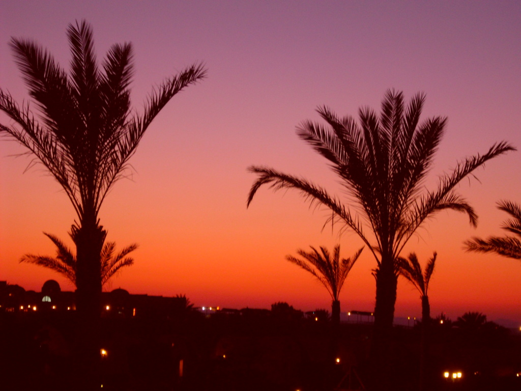 Palm trees against the sunset.
