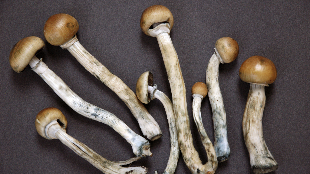 Denver voters have narrowly approved a ballot initiative to decriminalize psilocybin mushrooms. The ordinance effectively bars the city from criminally prosecuting or arresting adults 21 or older who possess them.