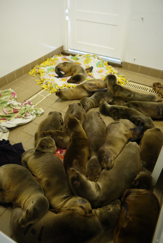 These malnourished and dehydrated pups are recovering in the