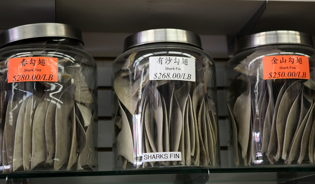 Glass containers filled with shark fins are displayed at a store in Chinatown on August 24, 2011 in San Francisco. A California law passed in 2011 banned the sale, distribution and possession of shark fins.
