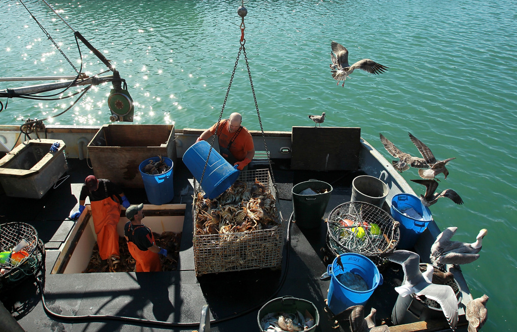 In this file photo, fishermen offload Dungeness crab from their fishing vessel on November 17, 2010 in San Francisco, Calif. This year, the state has delayed the Nov. 15 start of its commercial crab season after finding dangerous levels of a toxin in crabs.
