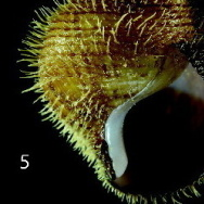 This spiky mollusk is called Alviniconcha strummeri, named after Joe Strummer, the late frontman for the Clash.