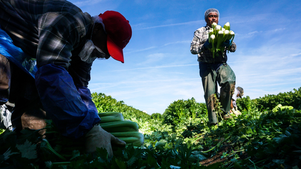 Researchers point to a number of causes for dwindling farmworkers: tighter border controls; higher prices charged by smugglers; well-paying construction jobs and a growing middle-class in Mexico that doesn't want to pick vegetables for Americans.