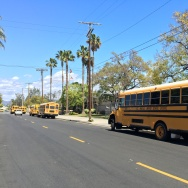 Los Angeles Unified School District buses wait to pick up students.