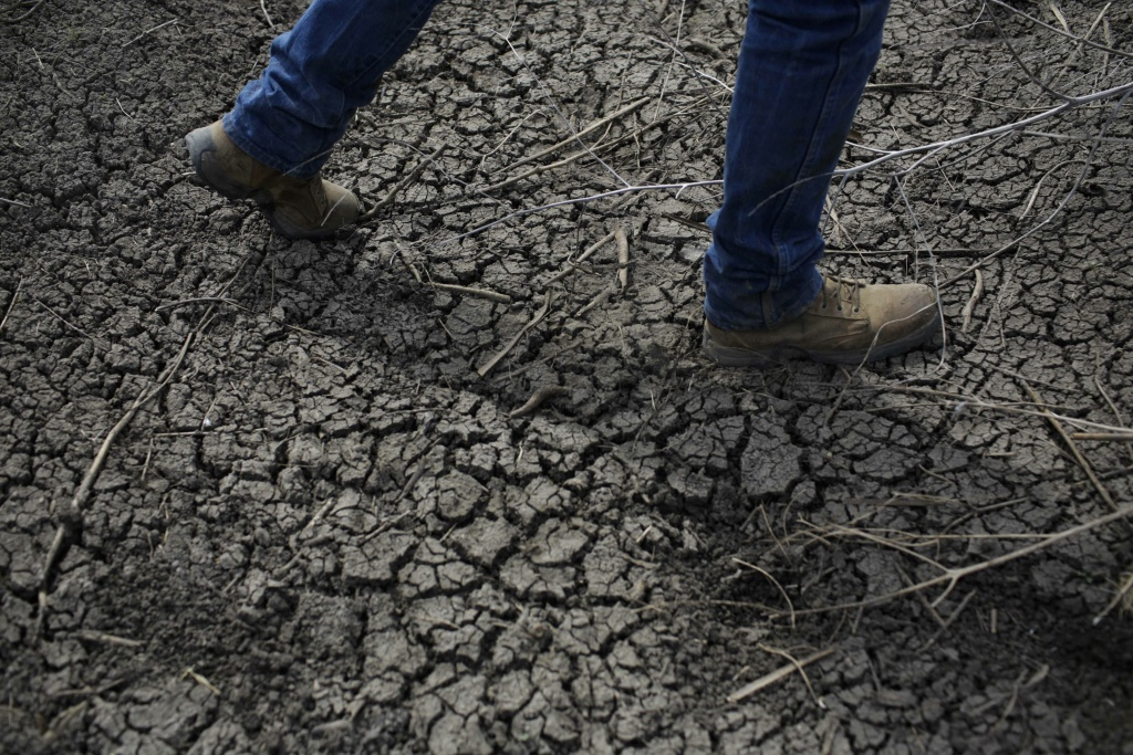 In this May 2014 file photo, fourth-generation rice farmer Josh Sheppard walks across a dried-up ditch at his rice farm in Richvale, California.