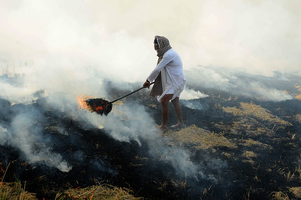 An Indian farmer burns rice stalks after harvesting the crop in fields on the outskirts of Amritsar in Punjab.