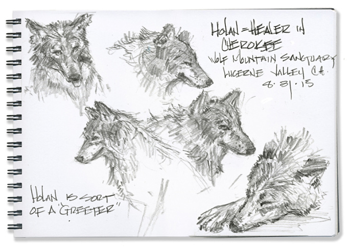A color sketch of wolves at Wolf Mountain.