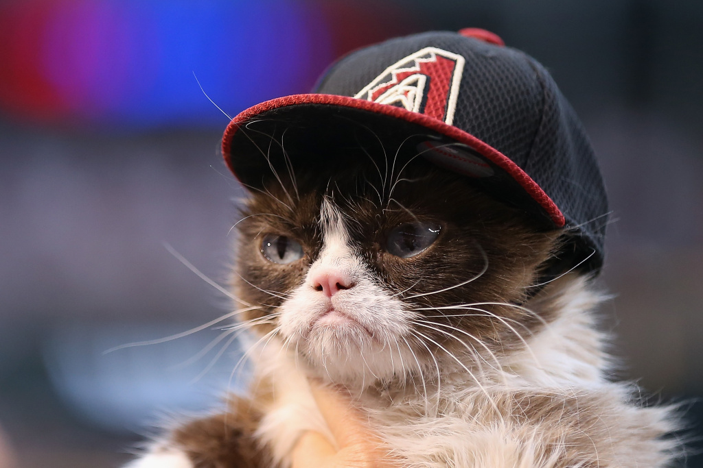 'Grumpy Cat' on the field before the MLB opening day game between the Colorado Rockies and the Arizona Diamondbacks at Chase Field on April 4, 2016 in Phoenix, Arizona.