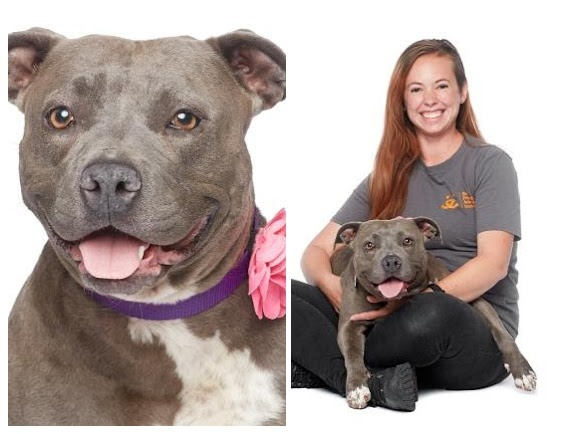 This is Bitsy, a pitbull up for adoption through Best Friends LA. Her photos have been styled to make her look as friendly as possible.