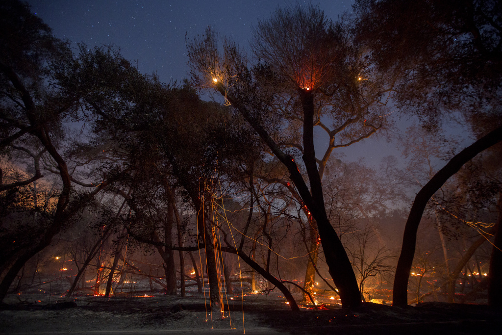 A freshly-burned forest is seen under the stars at the Lilac Fire in the early morning hours of December 8, 2017 near Bonsall, California.