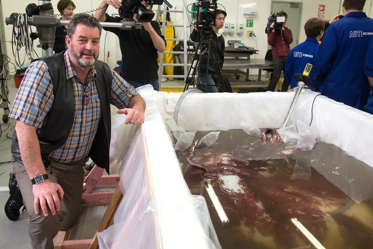 The giant squid was discovered in Antarctica's Ross Sea by a fisherman.
