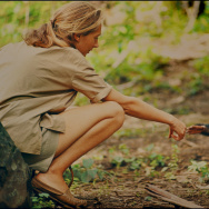 Jane Goodall and infant chimpanzee, Flint, reach out to touch each other's hands. Flint was the first infant born at Gombe, Tanzania after Goodall arrived in 1962.