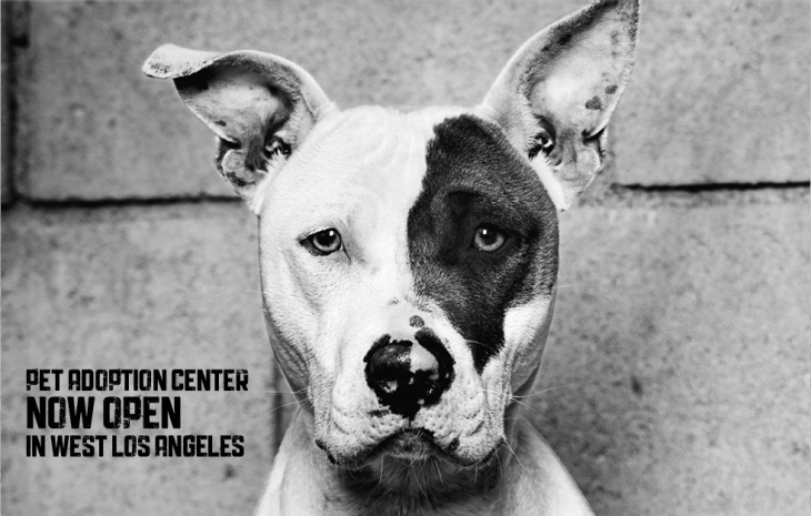 No Kill Los Angeles NKLA Adoption Weekend