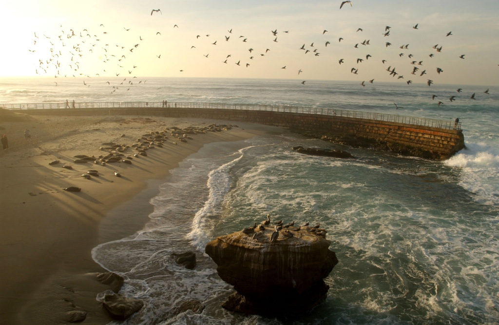 California's marine protected areas limit fishing along the coast in order to save diminishing fish populations.