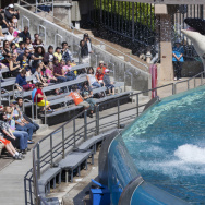 Visitors watch an orca performance at SeaWorld in San Diego this year. The company has seen attendance slip in the year since the release of a documentary film critical of the company's captive whale program.