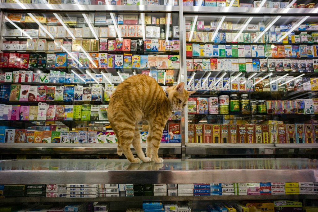 A cat streches on a counter top in a Chinese and western medicine shop in Hong Kong.