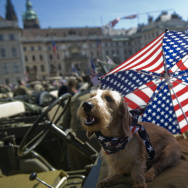 A dog reacts on an army historical US je